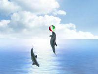 Dolphin Dreams Screensaver 5.5 software screenshot