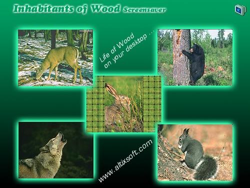 Inhabitants of Wood Screensaver 1.0 software screenshot
