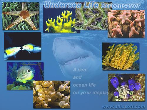 Undersea Life Screensaver 1.5 software screenshot
